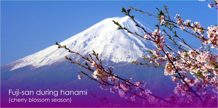 fuji during hanami